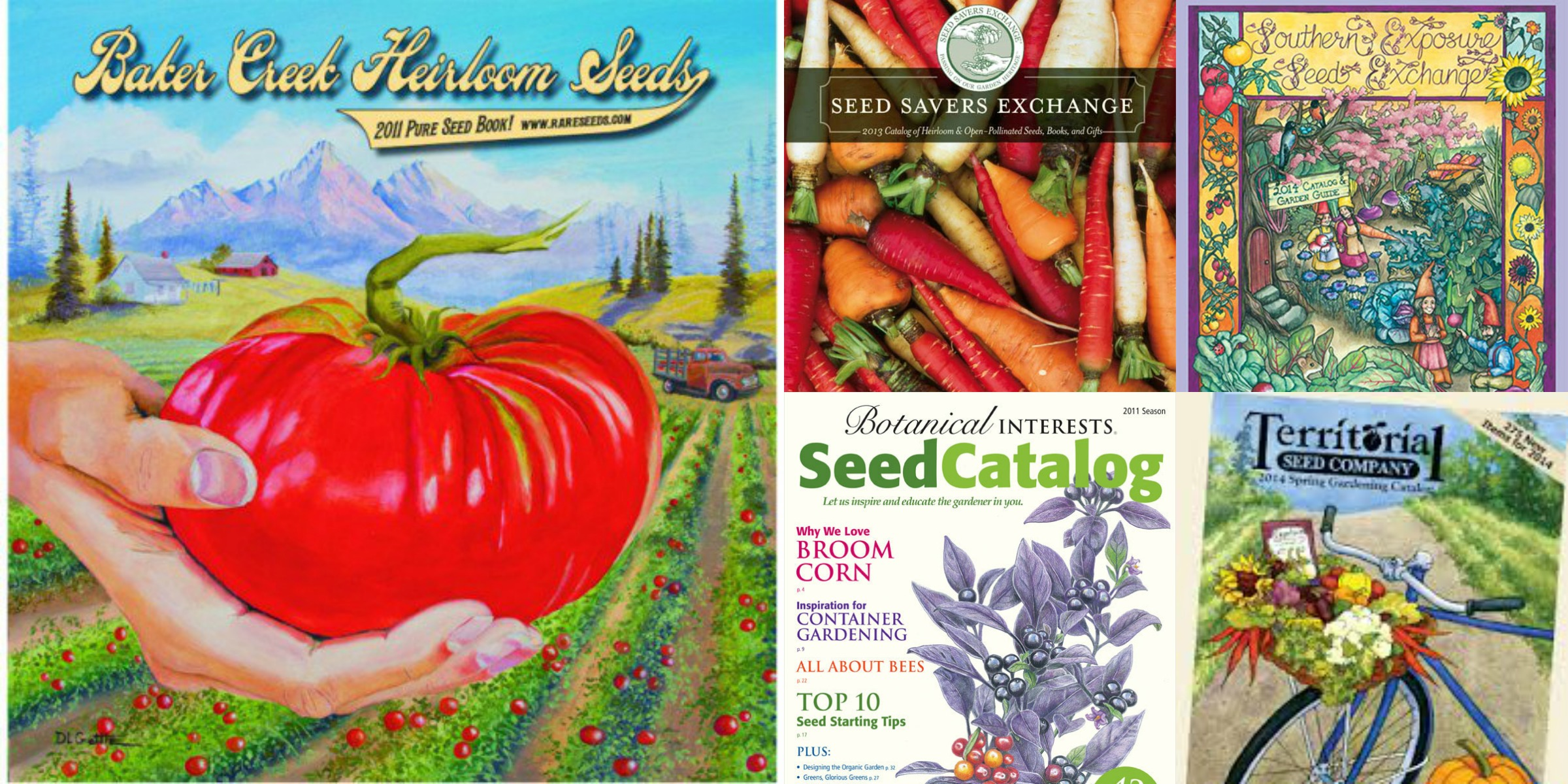 Why Use Organic Seed PLUS Our Fresh Picks for Best Organic Seed