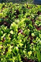 winter_salad_4-text11657