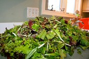 winter_salad_9-text11662